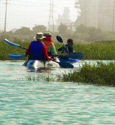 Kayakers enjoying the lovely Steamshovel Slough area  of Los Cerritos Wetlands