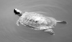 Los Cerritos Wetlands Turtle Trek Guided Nature Walk