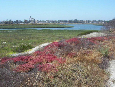 Upcoming Coastal Commission Hearing For Wetlands Land Transfer and Mitigation Bank