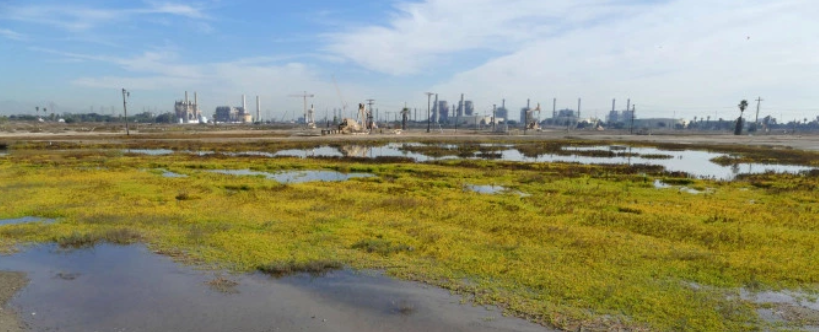 News: Coastal Commission Approves Land Swap To Restore Long Beach Wetlands