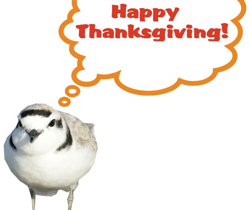 Happy Thanksgiving . We are grateful for you!